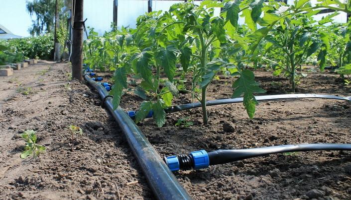 Как делается полив в огороде