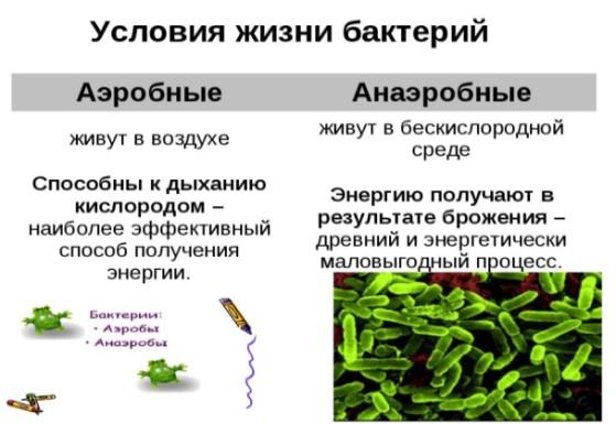 какие бактерии бывают в септике